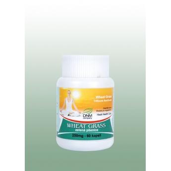 https://www.bharat.cz/400-thickbox/zelena-psenice-ajurvedske-kapsle-60-ks-250-mg-hesh.jpg